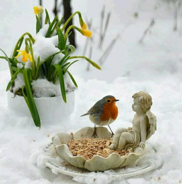 l'hôte de nos jardins en hiver