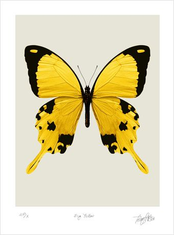 Butterfly Pictures to Print Main Artery Prints