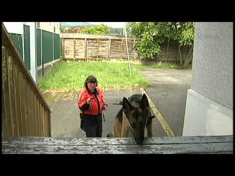 Search Rescue Dog Training Youtube Search Rescue