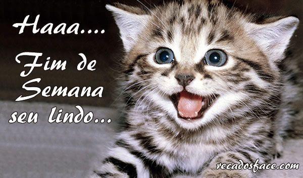 Bom Dia Cat: Filhotes De Gatos, Gatos E Fotos De