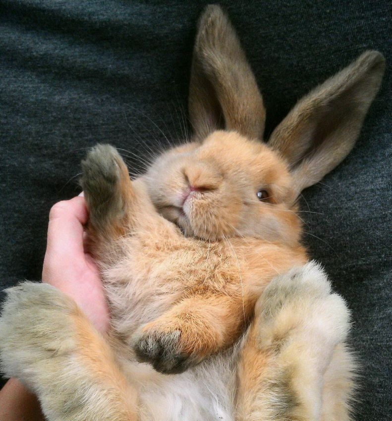 собачки картинки обнимашки с зайцами первую очередь, мое