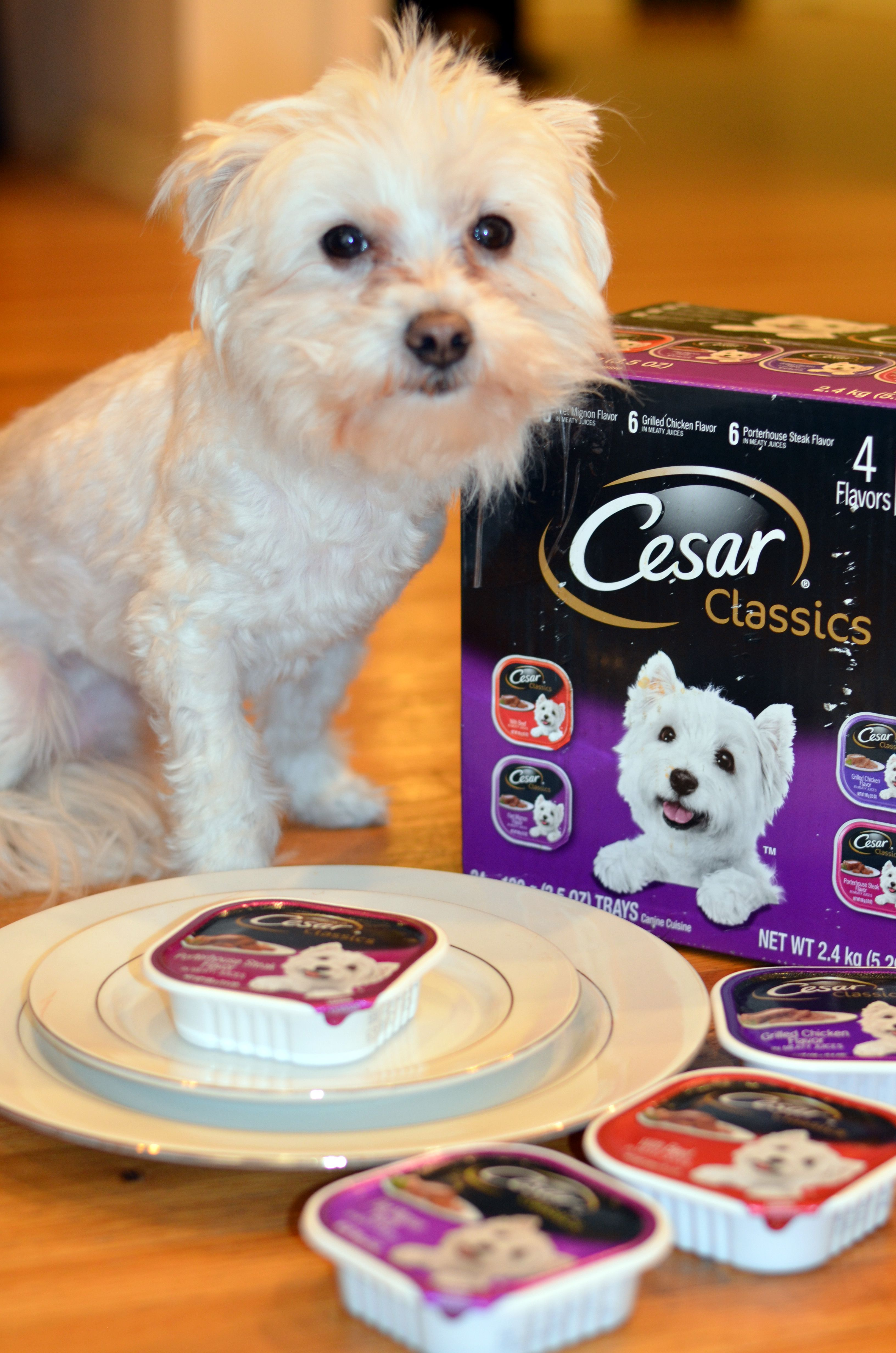 Why My Dog Likes to DineWithCesar Dry dog food, Maltese
