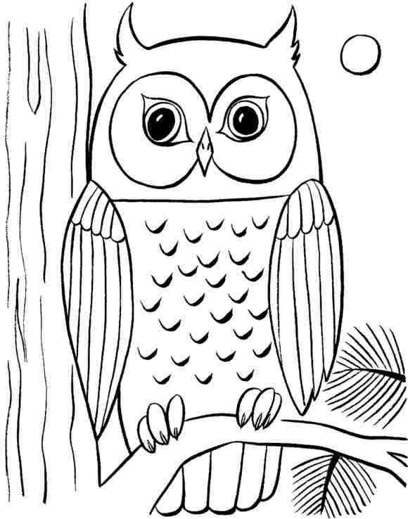 Free Coloring Pages Animals Drawing Lessons On How To Draw An Owl With Six Easy And Simple
