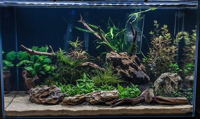 Manzanita Aquarium Google Search Aquarium Fish Tank Aquarium Fish Fresh Water Fish Tank