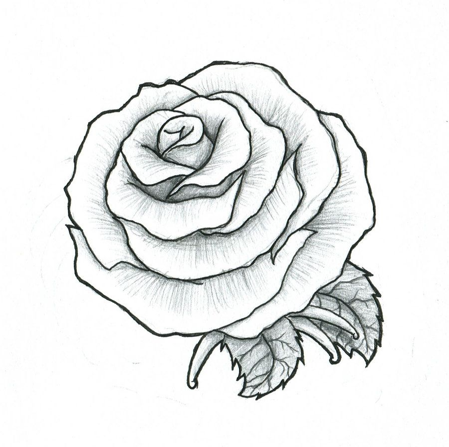 Line Drawing Rose Tattoo : Rose maybe a fist tattoo by pulverisedfetus motifs
