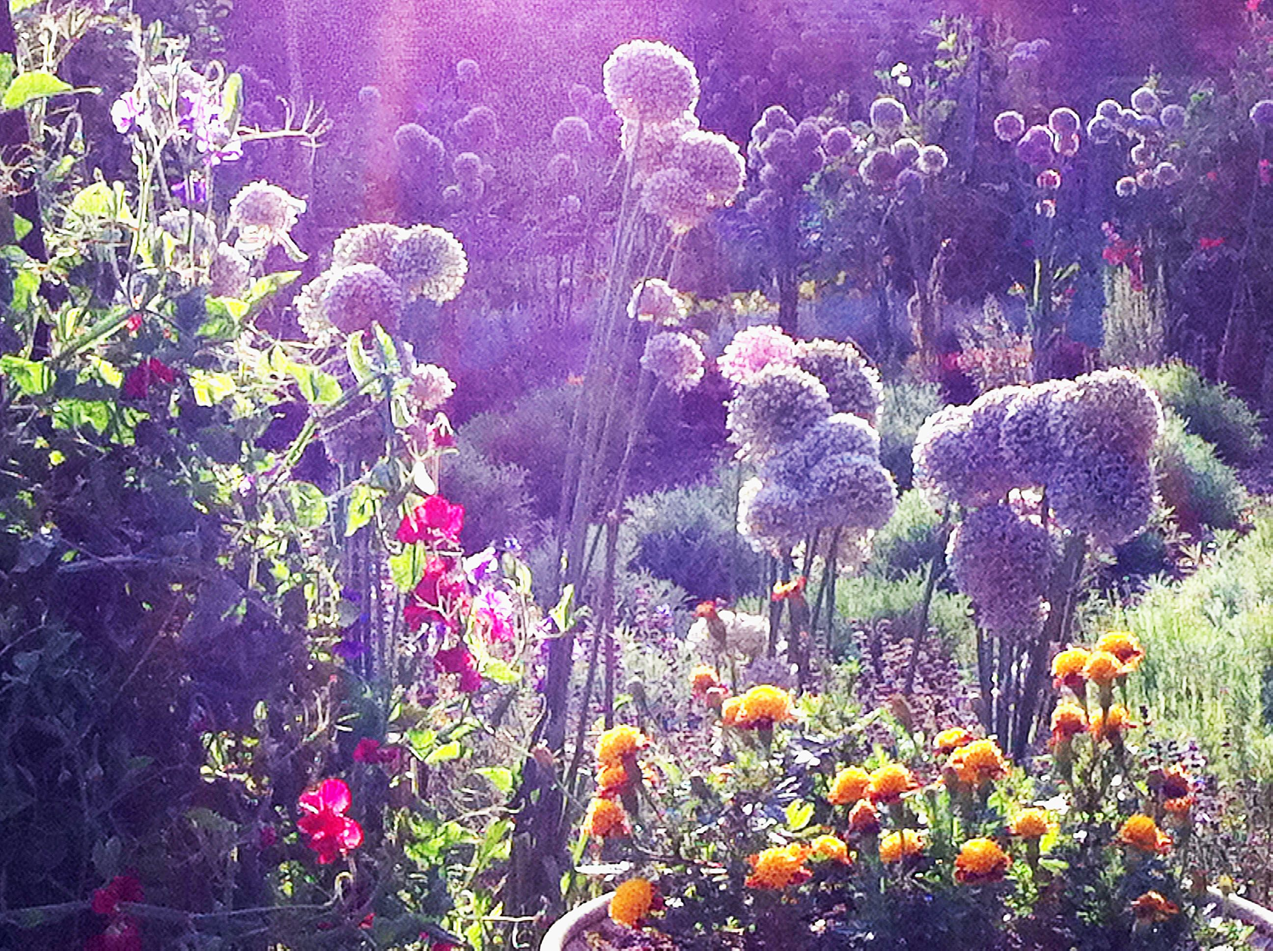 Image result for magical garden