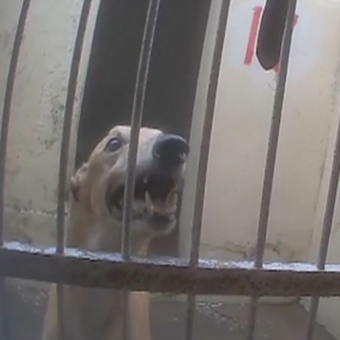 179 Greyhound Trainers Charged Over Unauthorised Exports Scottish Deerhound Lurcher Animal Rescue