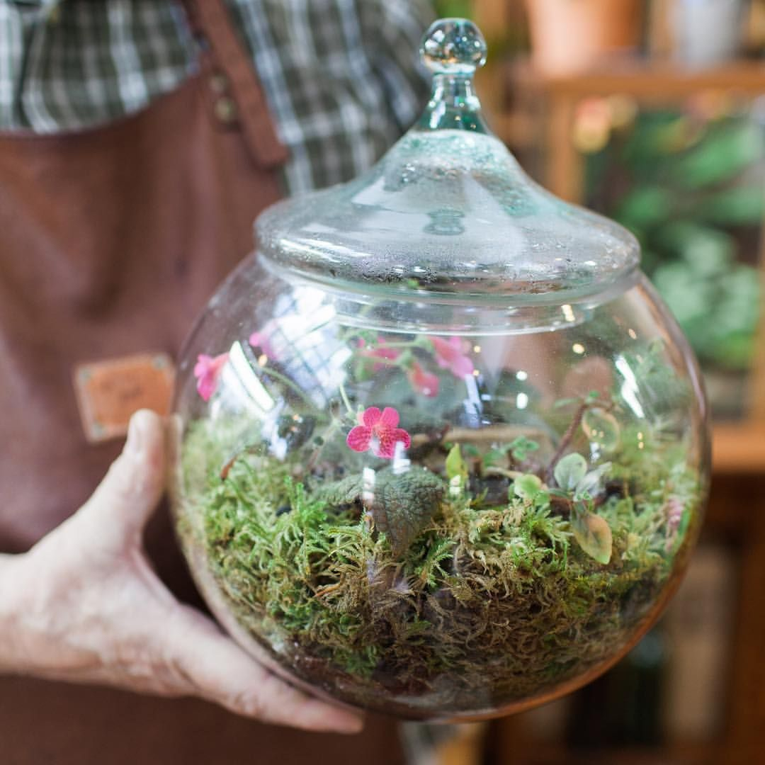 Have An Old Terrarium You D Like To Freshen Up Bring It To