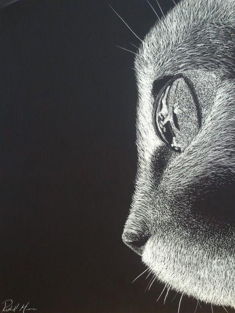 Scratch Art Cat By A Href Foxyrmtumblr FoxyRM