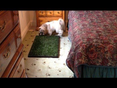 Shih Tzu Dog Lacey Using Her Indoor Potty Area Bathroom Youtube Indoor Dog Potty Area Dog Potty Area Shih Tzu Dog