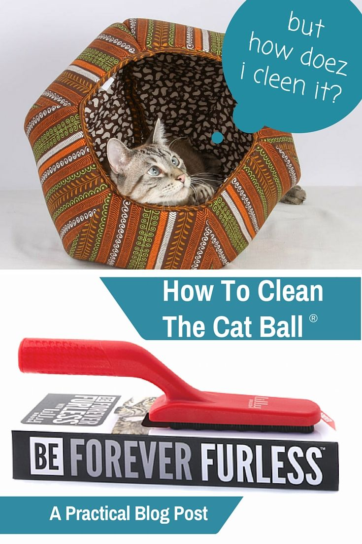 How to Clean Cat Beds advise