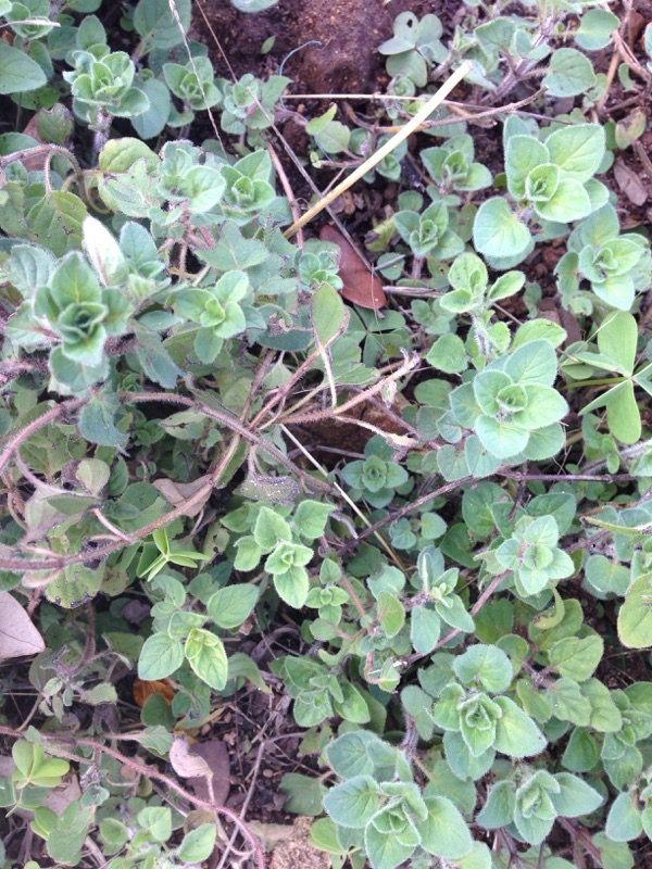 Garden Answers Plant Identification Plant
