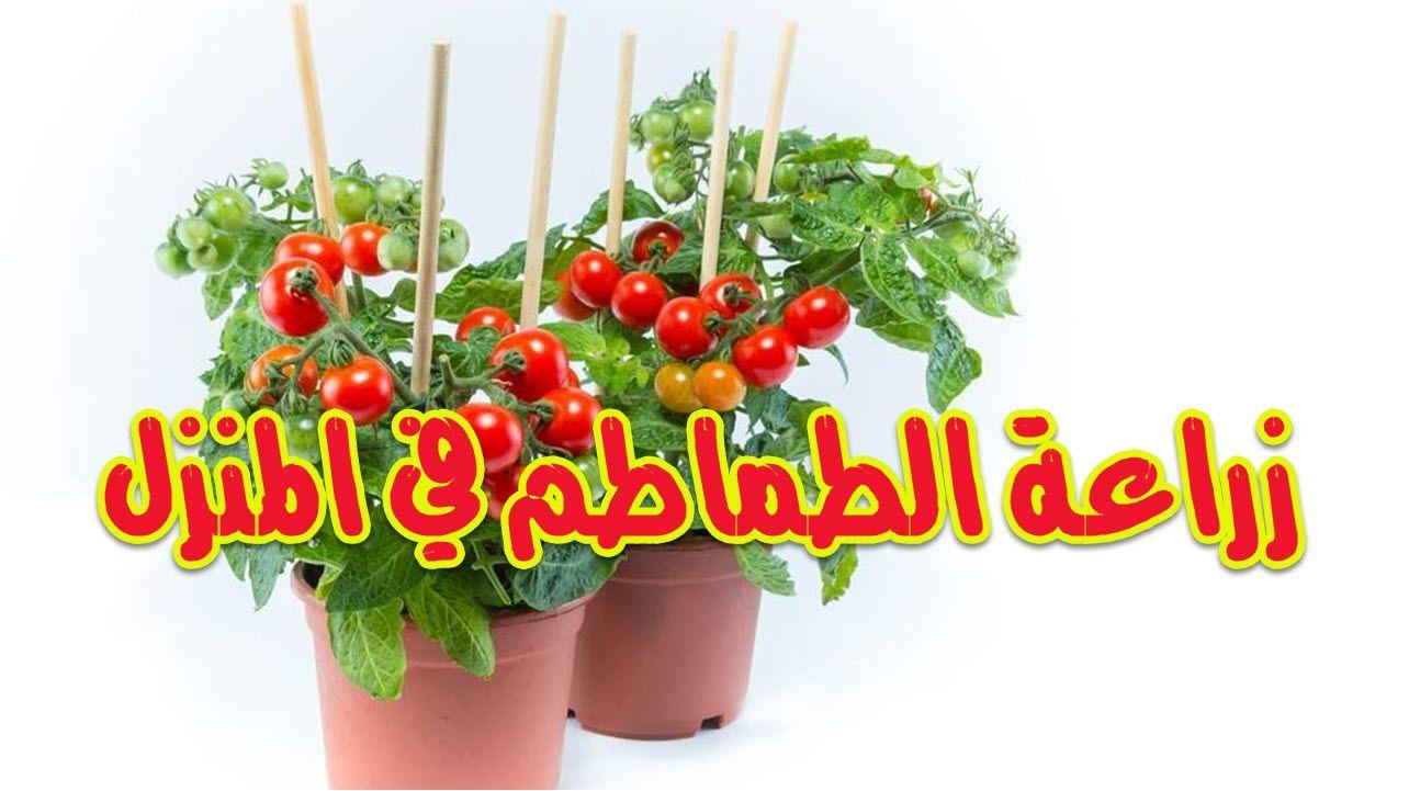 زراعة الطماطم في المنزل Holiday Decor Christmas Ornaments Planter Pots
