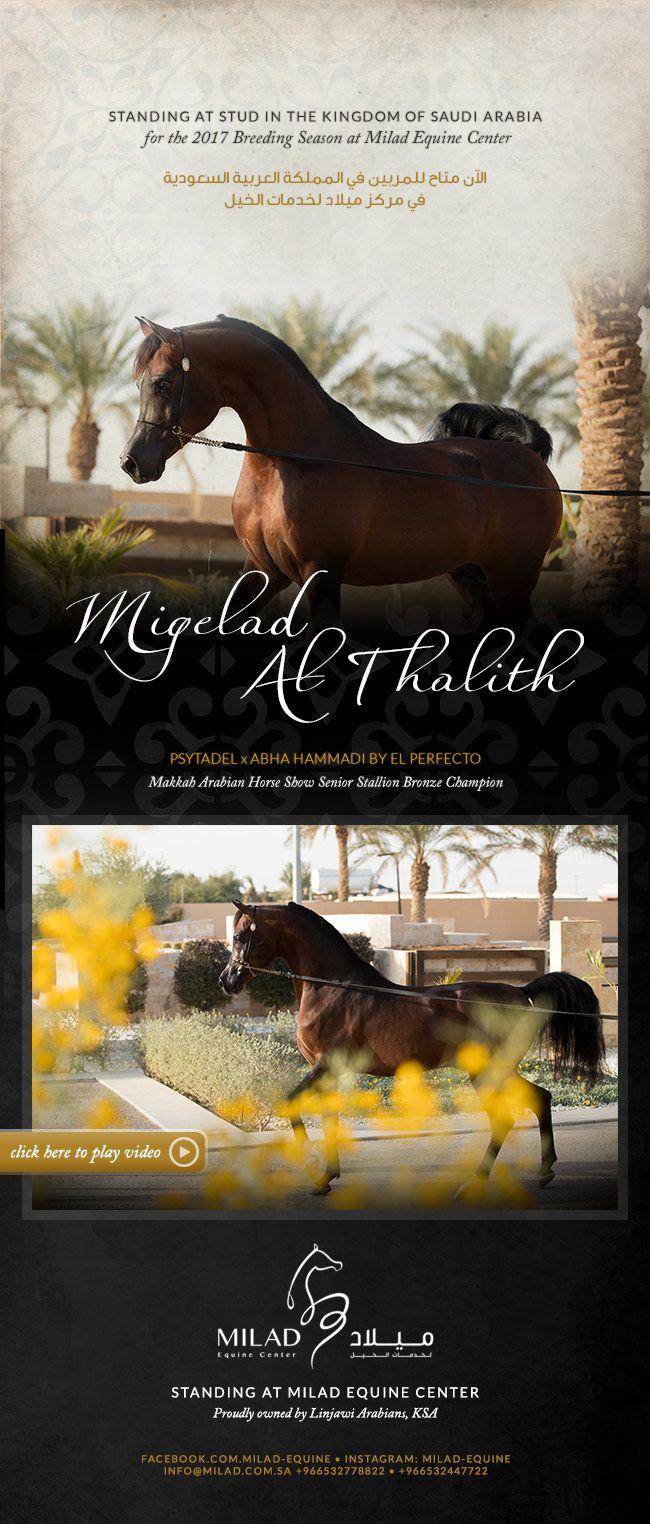 ﺍﻟفحل مجلاد الثالث متاح للتشبية في مركز ميلاد Poster Horses Movie Posters