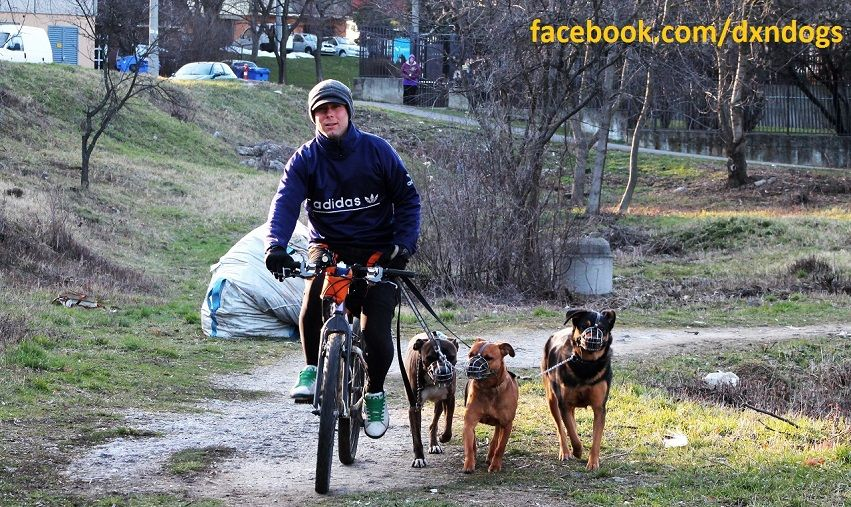 Exercise, discipline, affection: dog walking on mountain bike