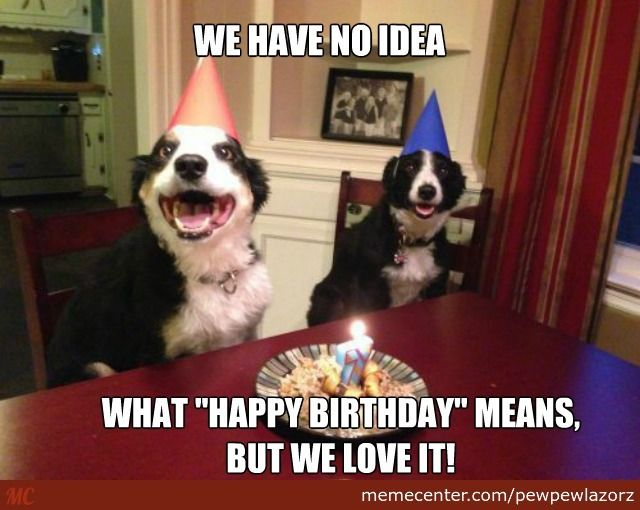 Funny Birthday Meme Google Search Happy Birthday Dog Birthday Meme Dog Happy Birthday Animals