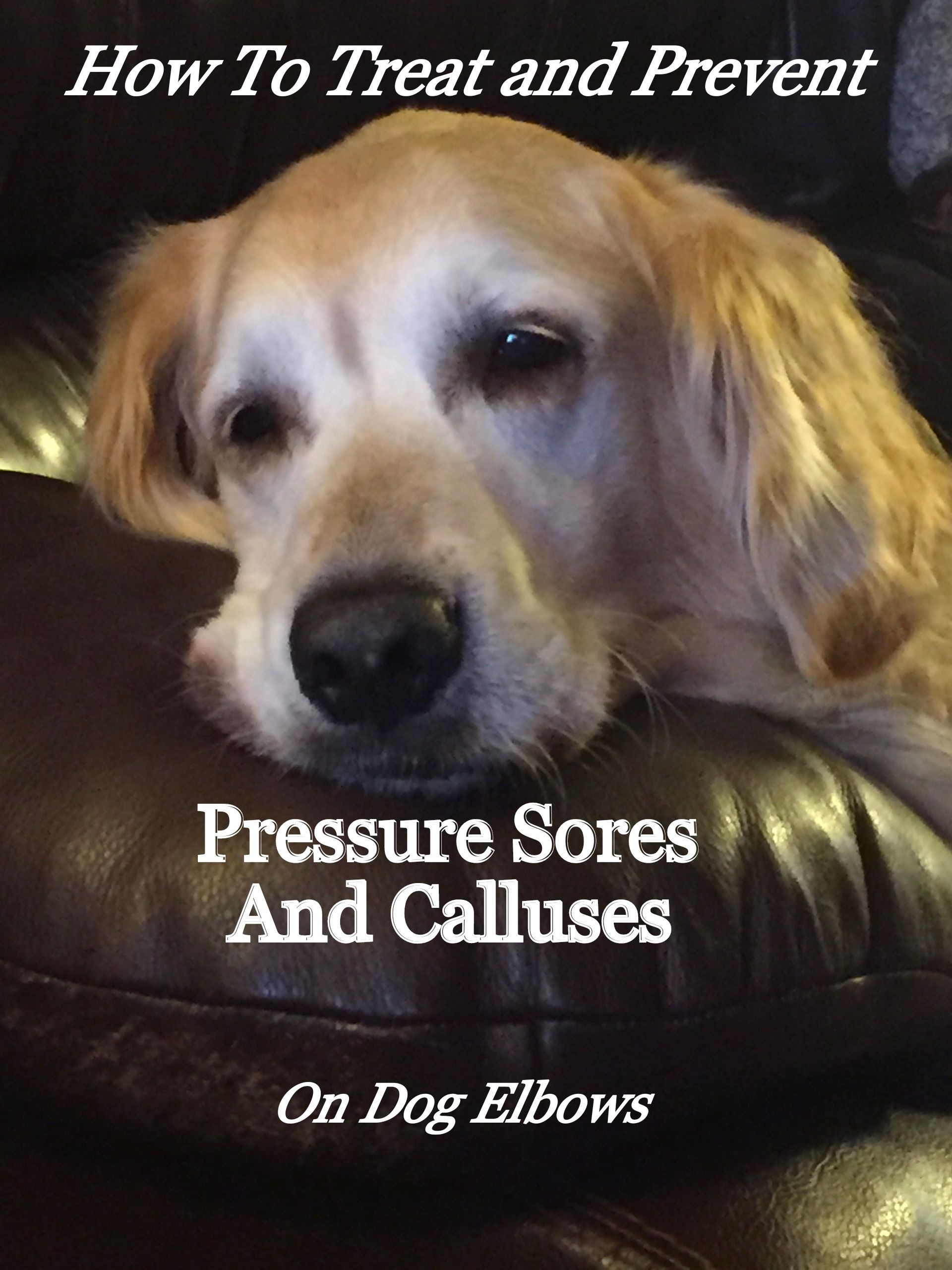 How to Treat and Prevent Calluses on Dog Elbows That Can