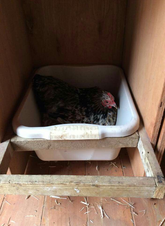 Great nest box idea. Easy to keep clean.