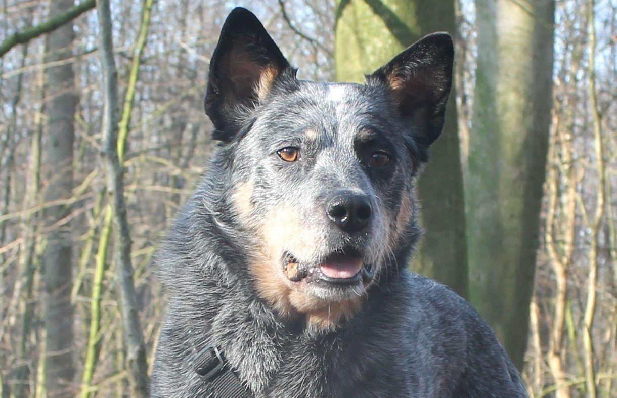 Fremdelphasen Wenn Der Hund Scheinbar Rumspinnt Meinhund24 Hund Angst Hunde Hunde Bilder
