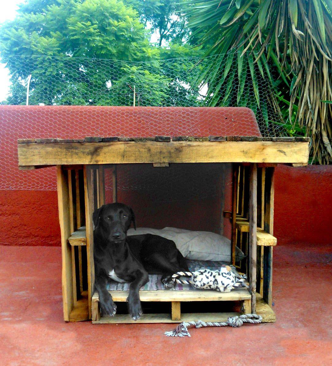 Casa de perro yea pinterest casa de perro casas para perros y mascotas - Casa de perro con palets ...