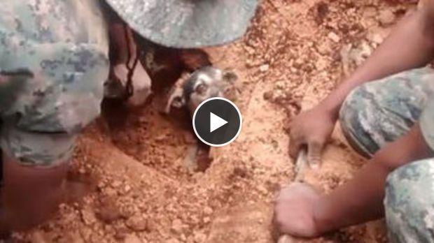 Après 18 heures passées sous terre, ce chien a été sauvé par ces secouristes. Un grand moment d'émotion