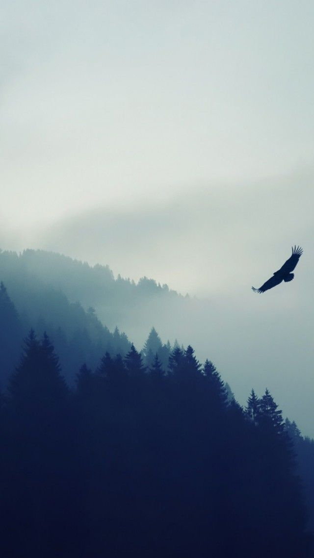 Forest 5k 4k Wallpaper Fog Eagle Landscape Wallpaper Vertical Landscape Landscape Wallpaper Nature
