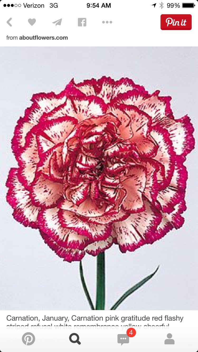 Carnation | Tattoo Half Sleeve Details | Pinterest | Carnation ...