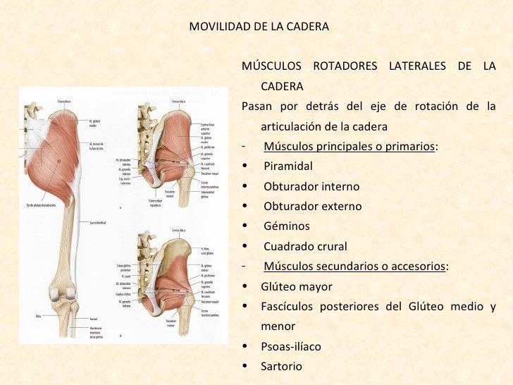 rotadores internos de cadera - Buscar con Google | ANATOMIA ...