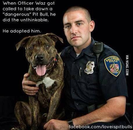 People don't realize that pitbulls aren't dangerous. They're just dogs who don't get treated right sometimes. You have to be gentle with them.