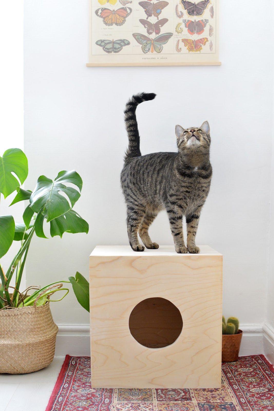 Tipi Pour Chat A Fabriquer 5 diy pour les chats | cattery ideas | diy jouet pour chat