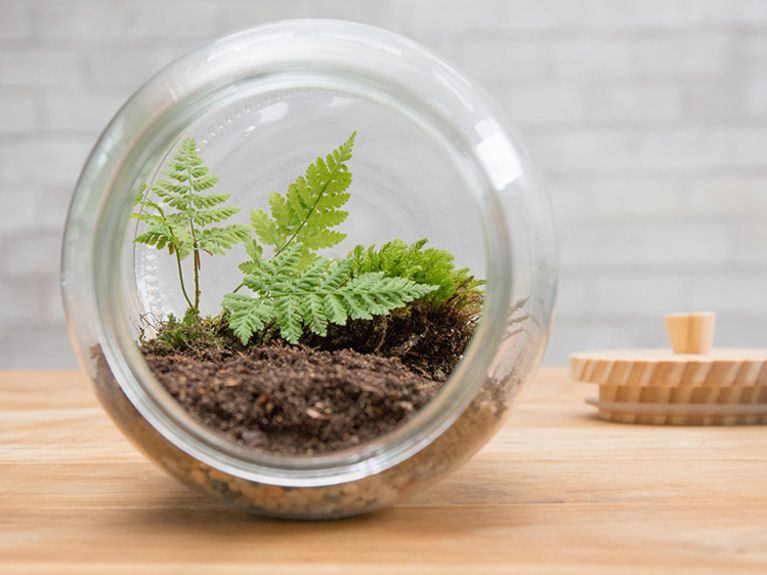 DIYAnleitung Kleines Biotop im Glas anlegen via DaWanda