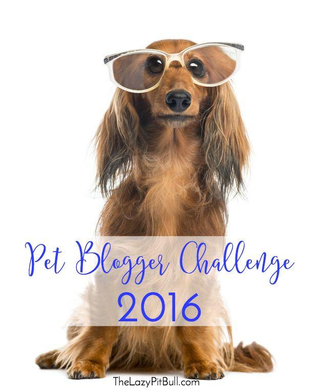 Pet Blogger Challenge 2016 Pets Stylish Dogs Dog Blog