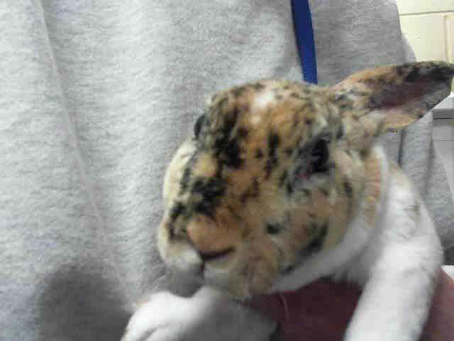 Freckled Bunny Wphs Pets Animal Shelter Humane Society