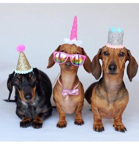 Dog Birthday Dog Costume Dog Birthday Hat Dog Party Hat