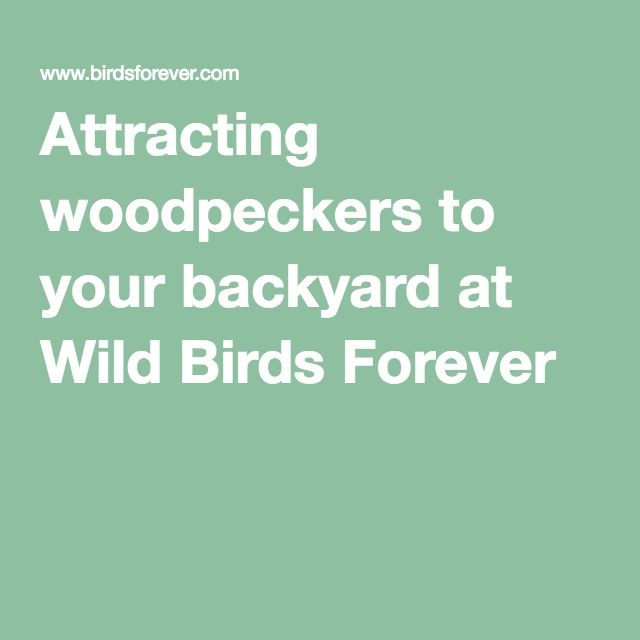 Attracting Woodpeckers To Your Backyard At Wild Birds