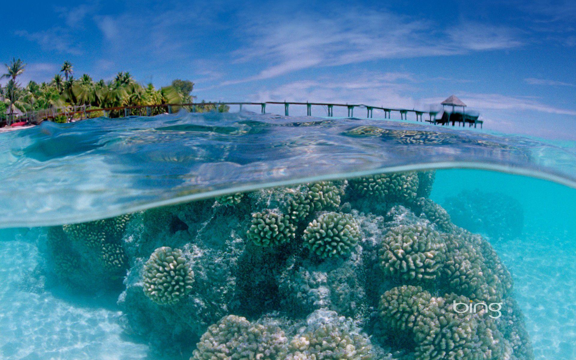 Fakarava Atoll Underwater 1920x1200 Awaa Landscape Wallpapers Paisajes Fondos De Pantalla Naturaleza
