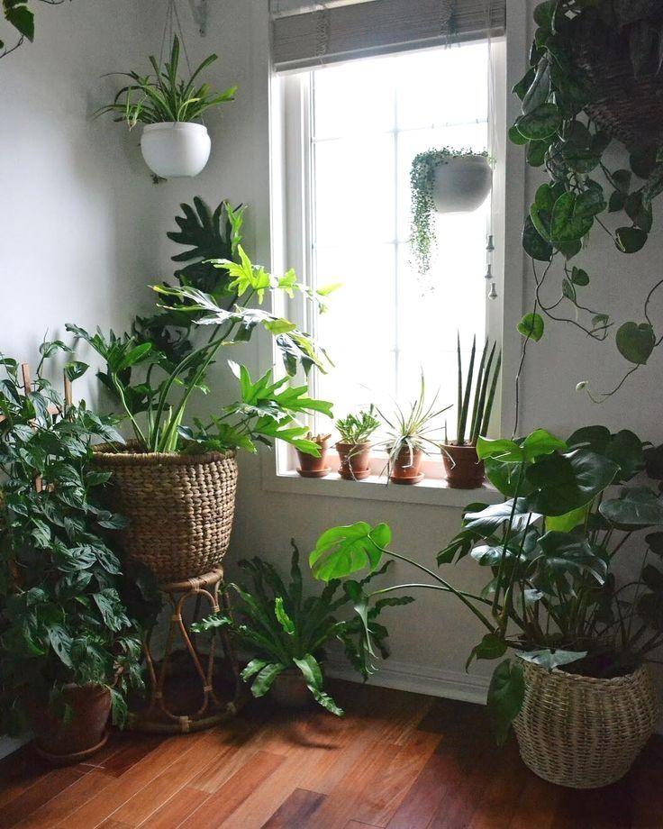 27 Interior Design Plants Inside House Pictures Interior Design Plants House Plants Decor Easy House Plants