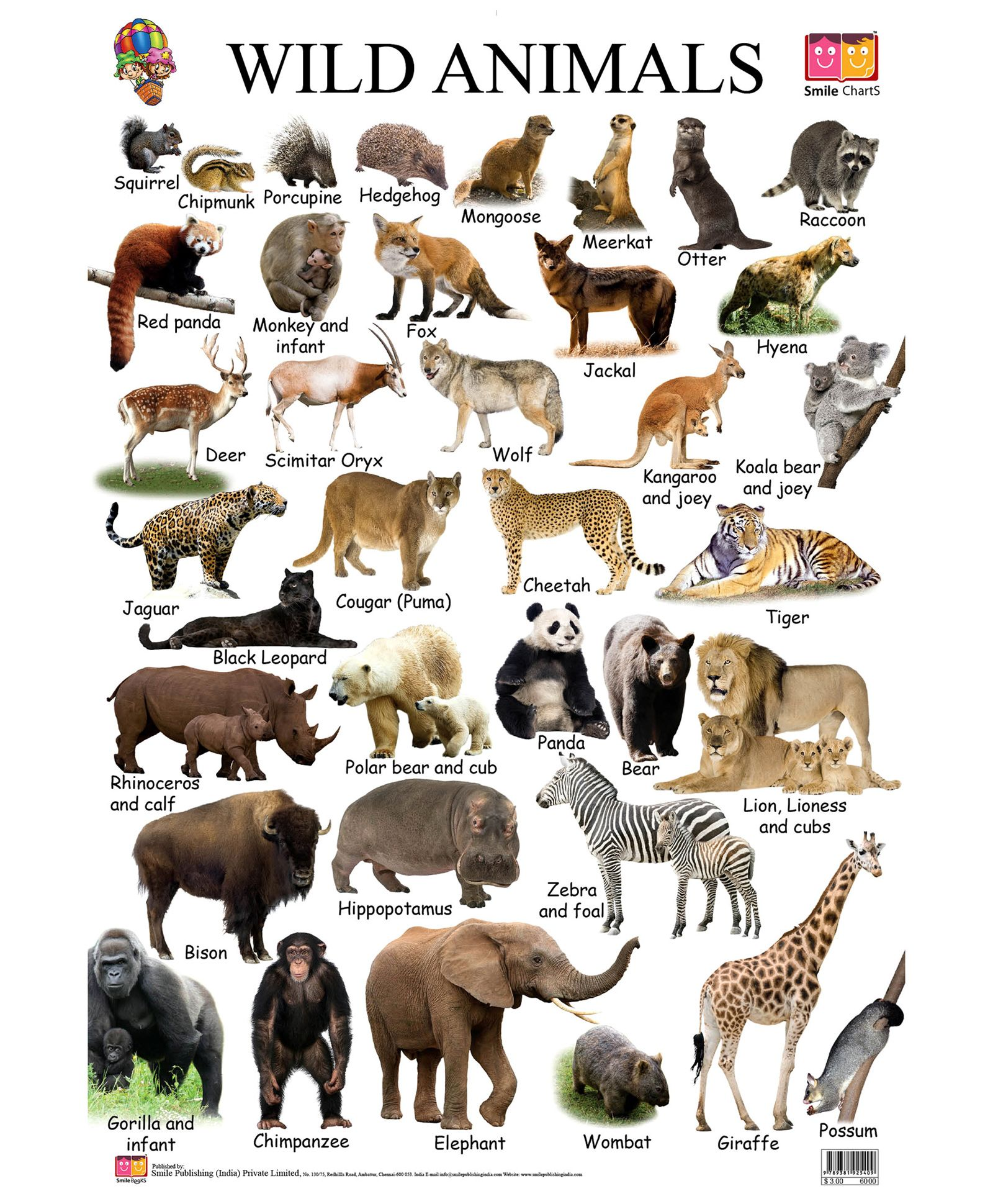 Wild Animal Images With Name Animals name in english