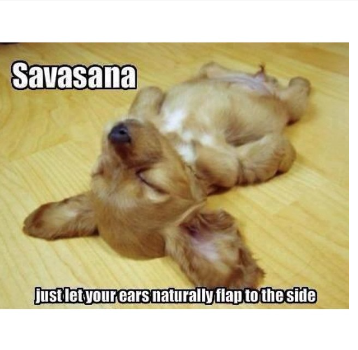 Yoga Inspiration Quotes Funny Animals Funny Animal Pictures Cute Animals