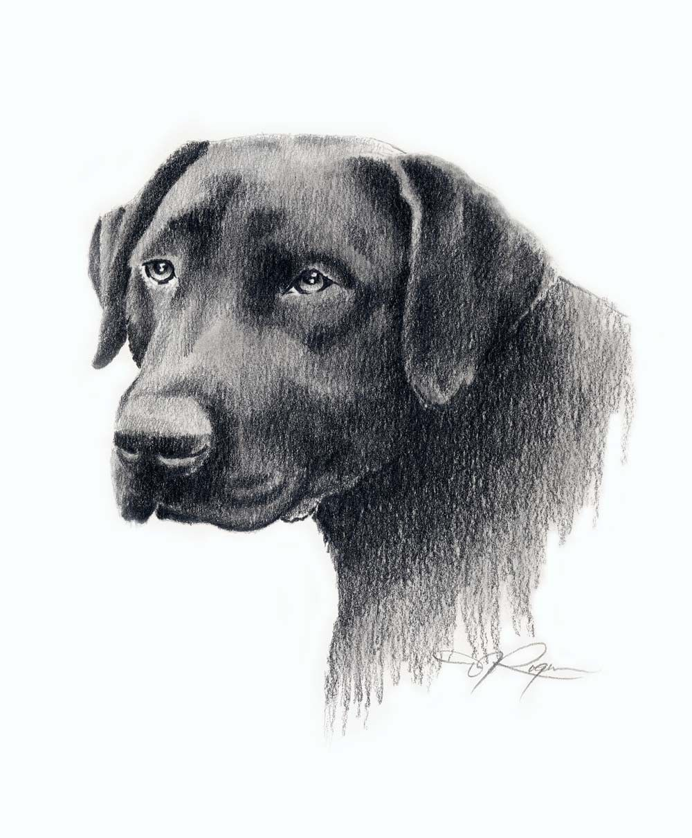 Black lab drawing labrador dog art print by artist dj rogers in 2019 drawings dessin chien - Dessin labrador ...