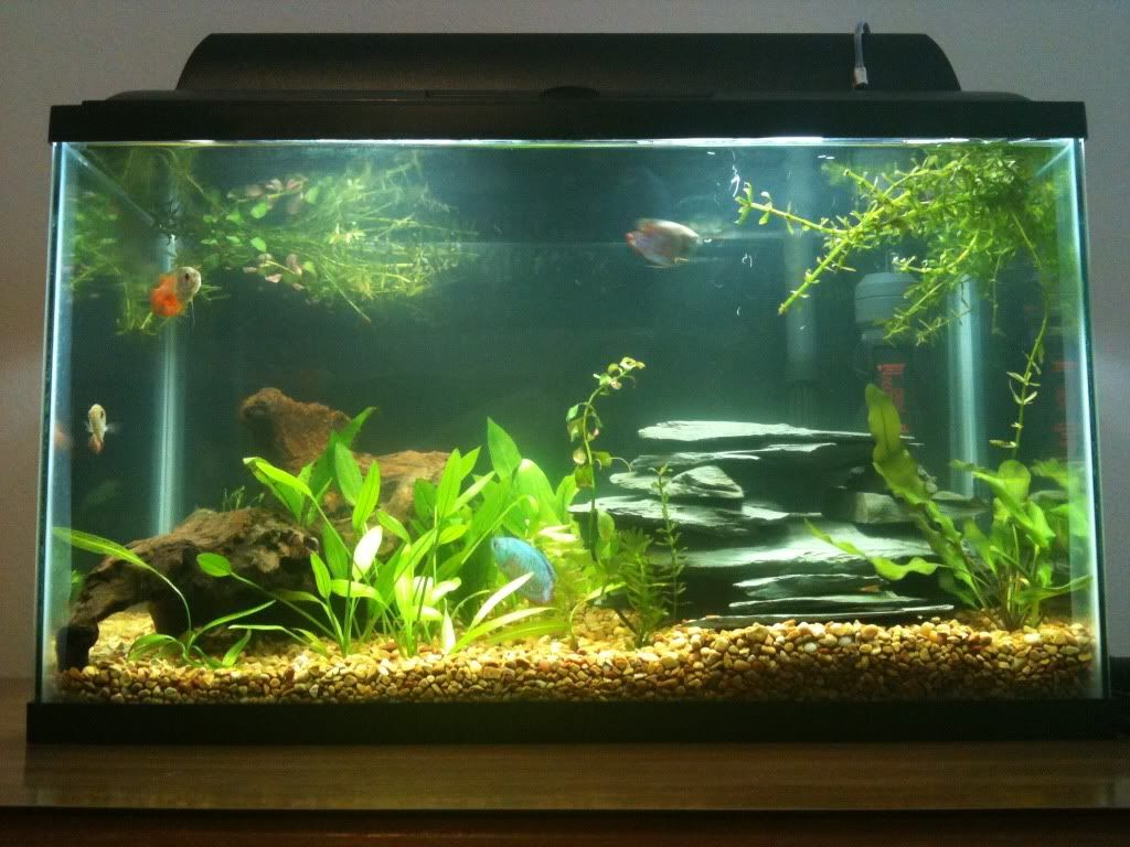 Image Result For 10 Gallon Aquascape Tank I Like The Rocks In This Aquascape Fresh Water Tank Fish Tank
