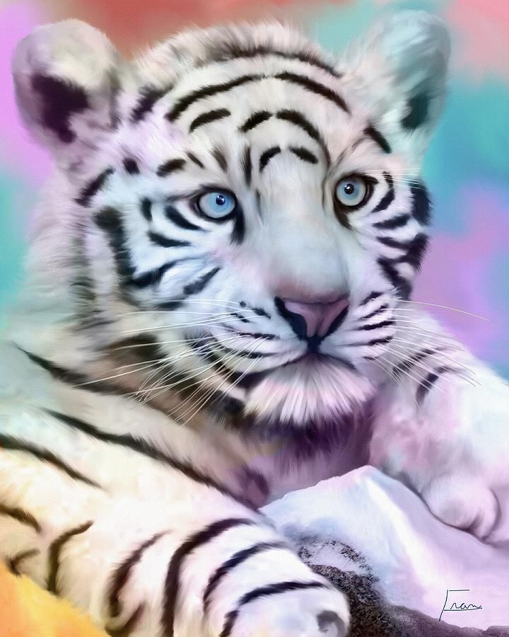 White Tiger With Blue Eyes Baby White Tiger With Blue Eyes Baby Blue Eyes Digital Art Baby White Tiger Tiger Pictures White Tiger