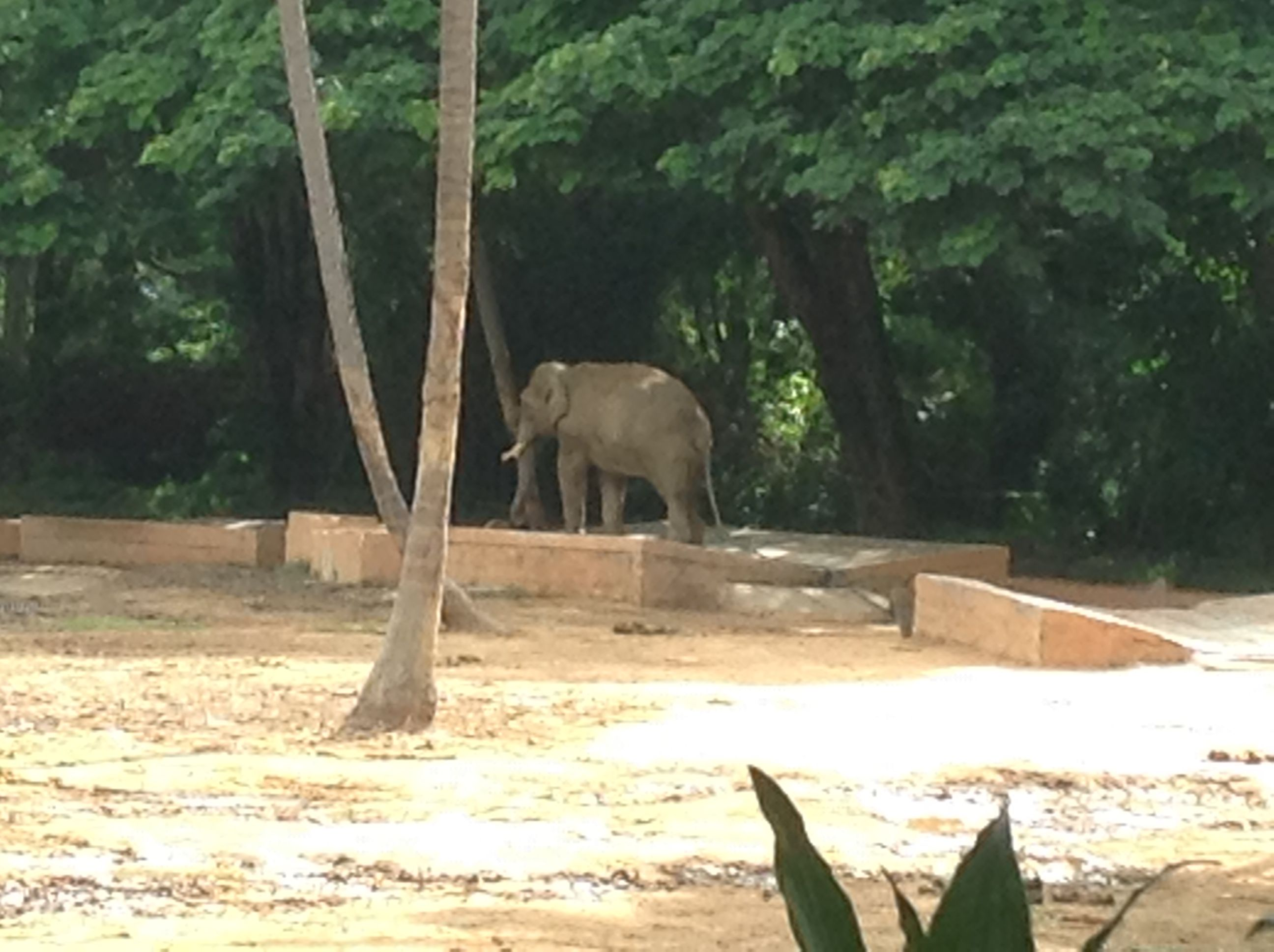 f7674f4386402ff19d22a6d8fd5eb823 - Mysore Zoo Sri Chamarajendra Zoological Gardens