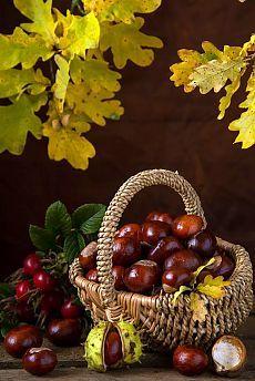 Дары природы фрукты и овощи! | Природа, Фрукты, Овощи