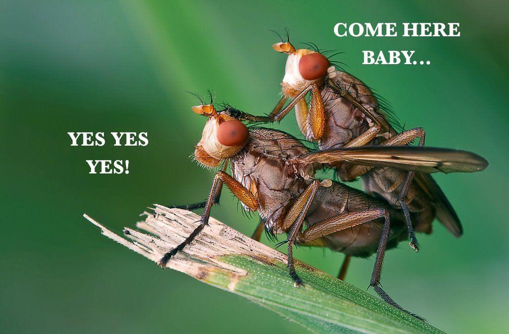 pseudoscorpion and beetle relationship memes