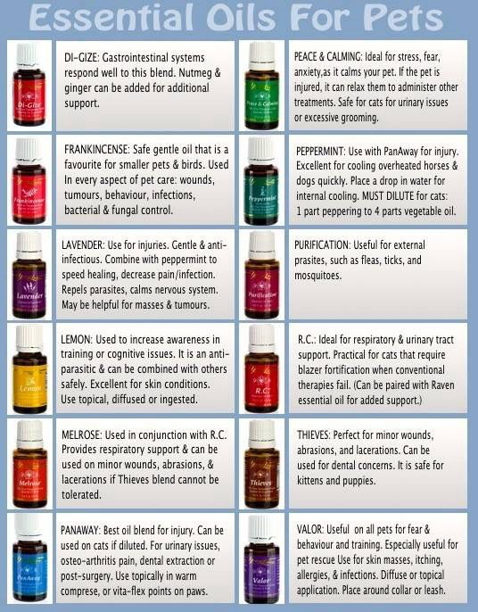 Essential Oils for Pets (With images) Living essentials