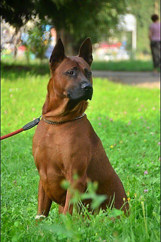 Beagle Puppy Portrait Women/'s Tee Image by Shutterstock
