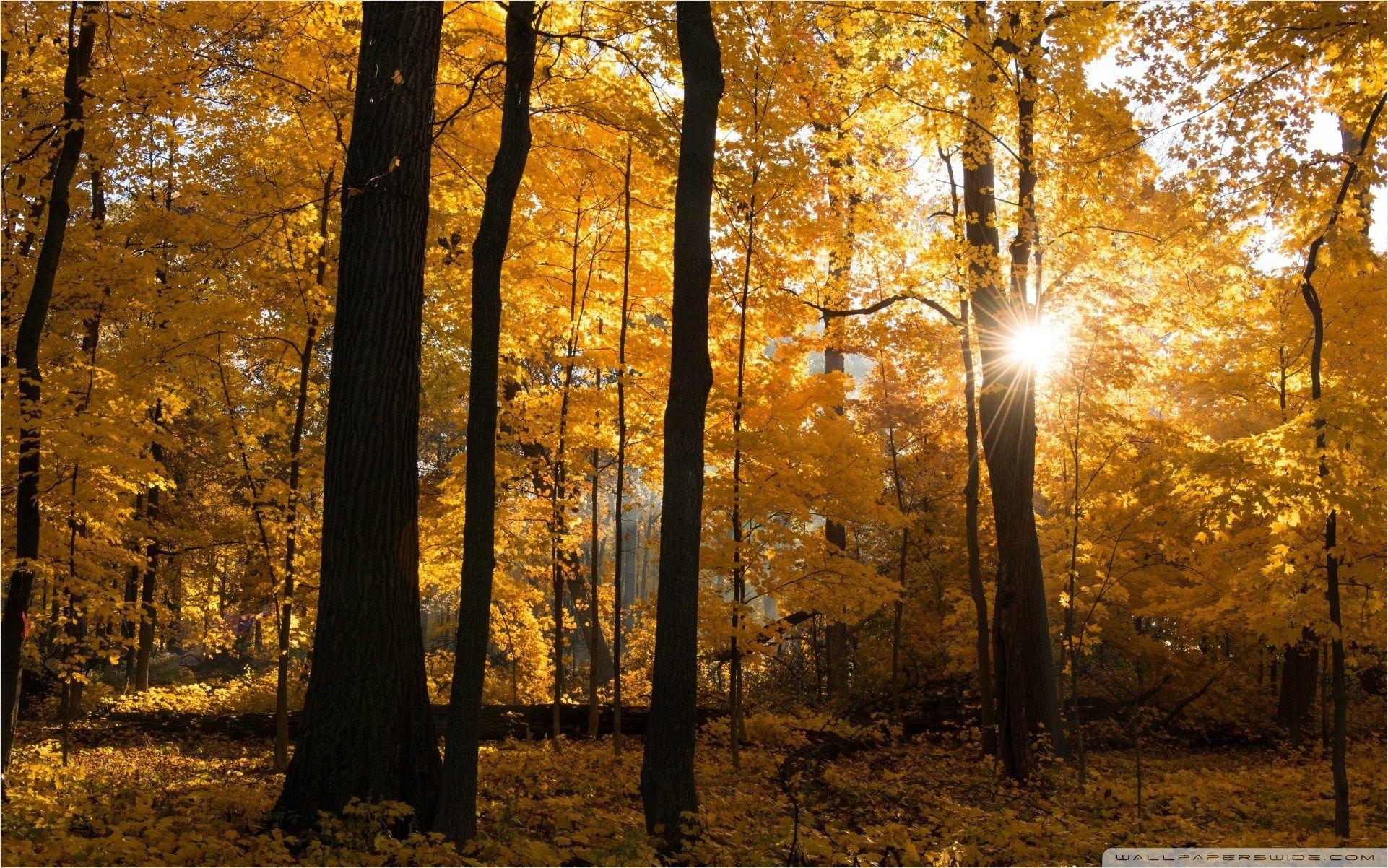 Fall Colors Sunrise Forest Sunrises Nature Forest Wallpaper Desktop Wallpapers Backgrounds