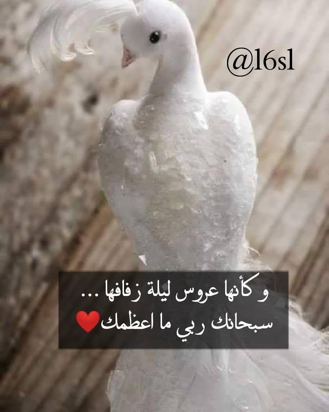 حساب جميل يستحق المتابعة Aiqtibasat Adabia Aiqtibasat Adabia Aiqtibasat Adabia Animals Parrot Bird