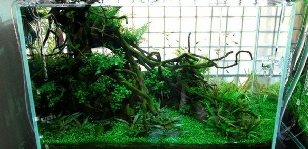 Aquarium Takashi Amano-Wasserpflanzen auswählen Aquarium - deko fur aquarium selber machen
